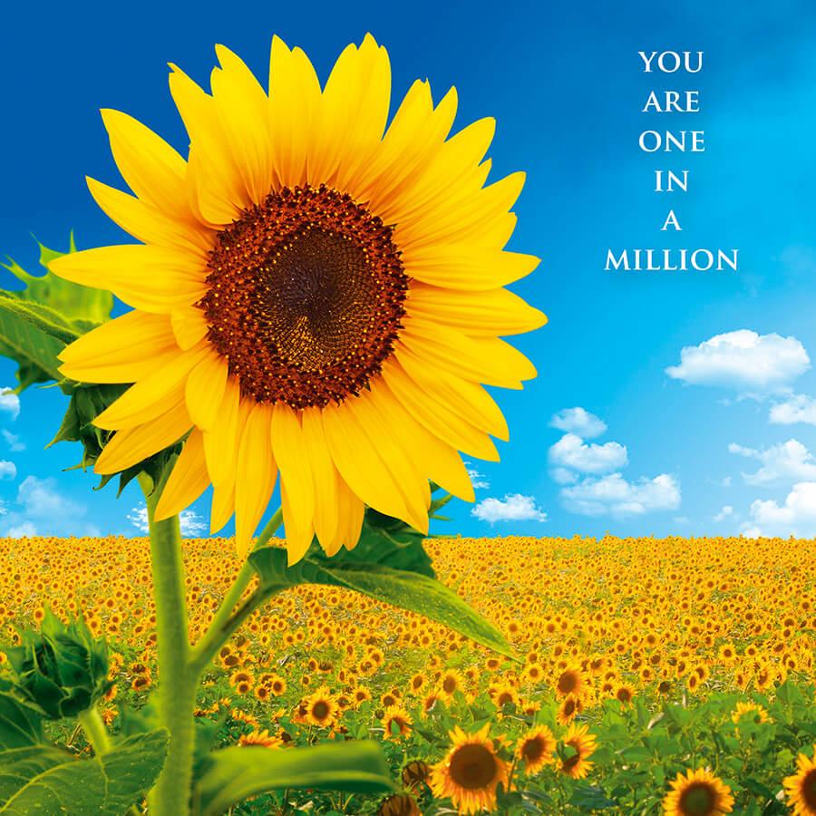 IN105 Sunflower